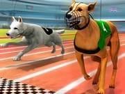 Köpek Yarışı